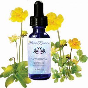 IlluminEssence-buttercup-flower-essence